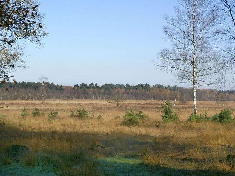 Herbstliche Heidelandschaft im Elmpter Schwalmbruch; Foto: 08.11.2009, Niederkrüchten