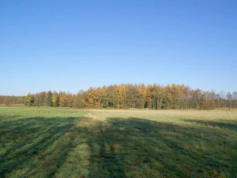 Offene Landschaft und Wald im Elmpter Schwalmbruch; Foto 08.11.2009, Niederkrüchten