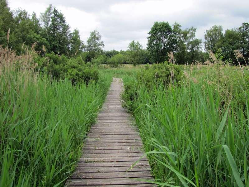 Im Moor des Elmpter Schwalmbruchs; Foto: 20.06.2010, Niederkrüchten