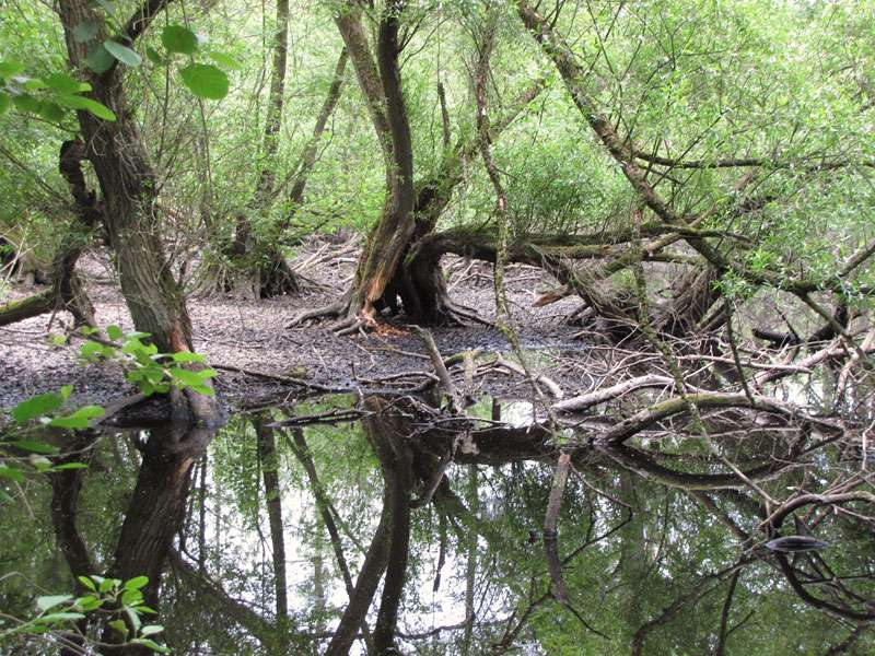 Im Elmpter Schwalmbruch gibt es viele sehr feuchte Bereiche; Foto: 20.06.2010, Niederkrüchten