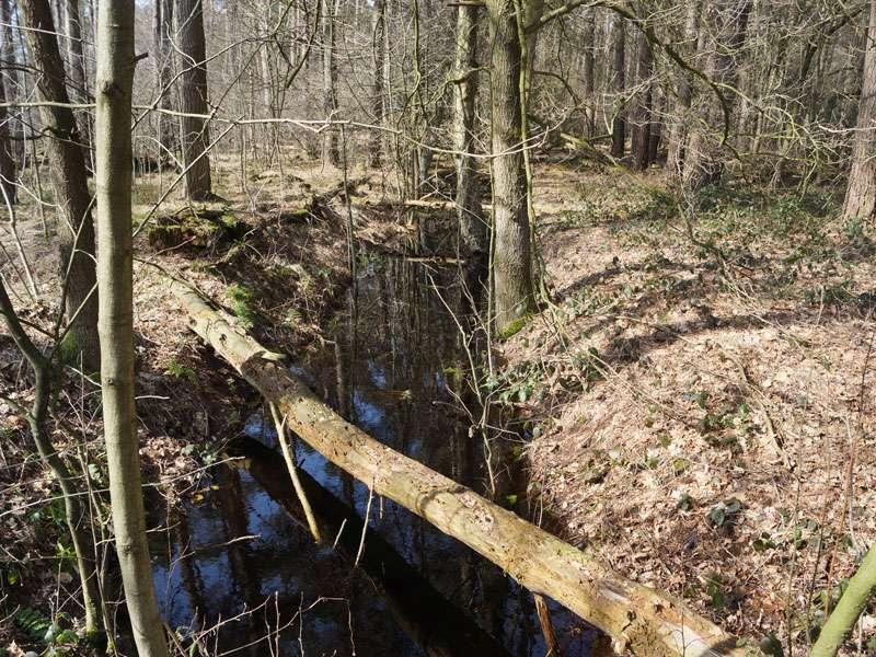 Entwässerungsgräben ziehen sich durch Teile des Naturschutzgebiets Fürstenkuhle; Foto: 26.03.2016, Gescher
