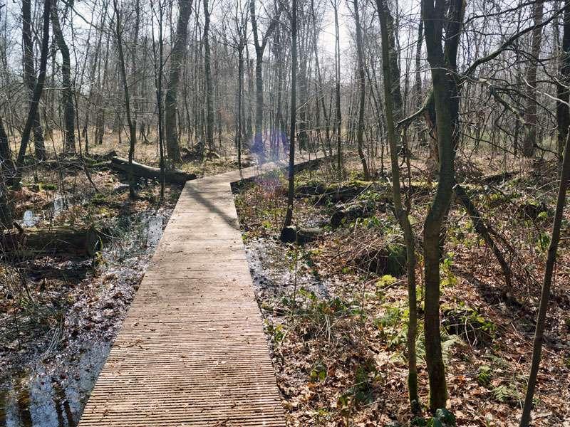 Auf einem Bohlenweg kann man das Naturschutzgebiet Fürstenkuhle trockenen Fußes durchwandern; Foto: 26.03.2016, Gescher
