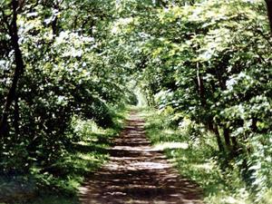 Das Wäldchen auf Langeoog; Foto: 2002