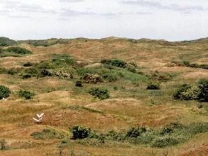 Blick auf die Vogelkolonie; Foto: Juni 2002, Langeoog