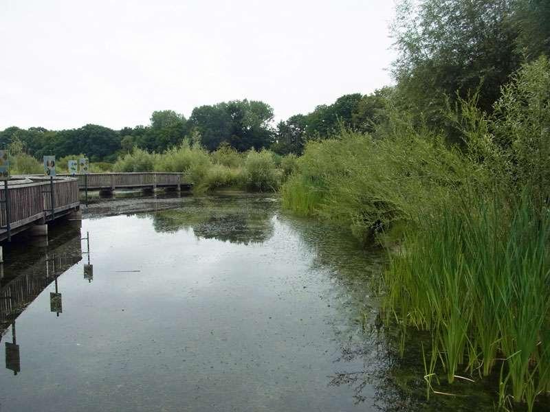 Das kleine Biotop am Rieselfeldhof beherbergt unter anderem Libellen und Amphibien; Foto: 19.07.2015, Münster