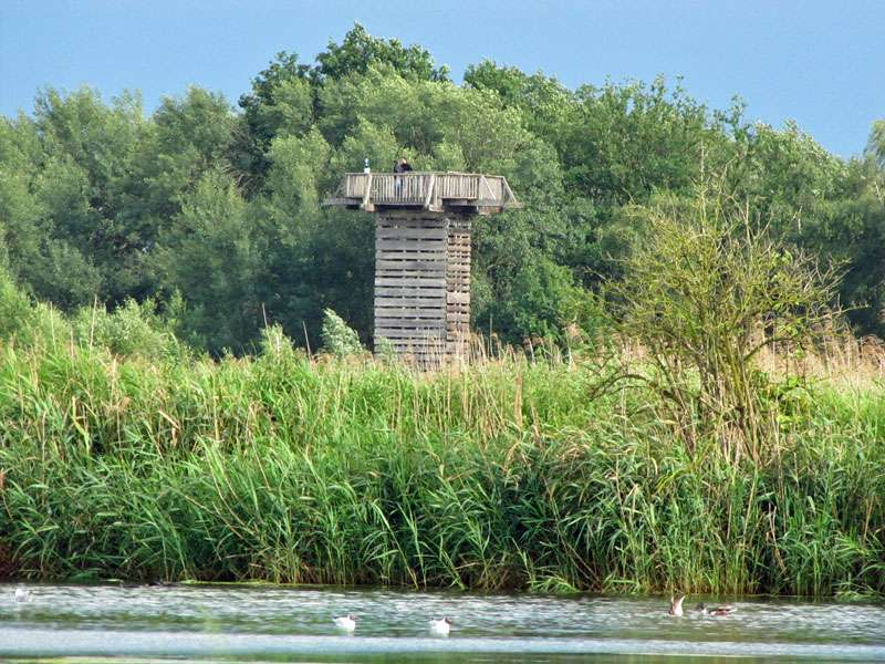 Der 10 m hohe Beobachtungsturm in den Rieselfeldern; Foto: 18.06.2011, Münster