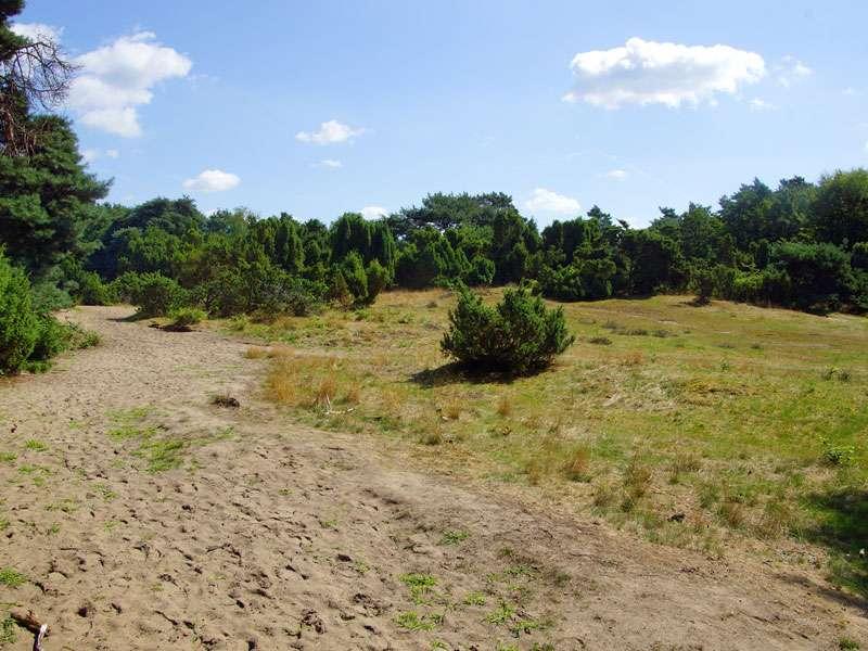 Der sandige Boden ist typisch für die Westruper Heide; Foto: 26.07.2015, Haltern am See