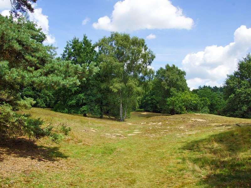 In der Westruper Heide ist die Landschaft relativ eben; Foto: 26.07.2015, Haltern am See