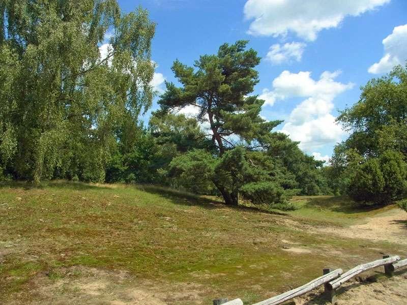 Verschiedene Bäume säumen offene Bereiche in der Westruper Heide; Foto: 26.07.2015, Haltern am See