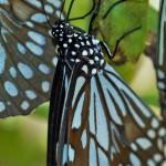 Schmetterlinge (Butterflies and Moths, Lepidoptera)