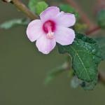 Pflanzen (Plants, Embryophyta)