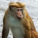 Säugetiere (Mammals, Mammalia)
