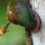 Schnecken (Slugs and Snails, Gastropoda)