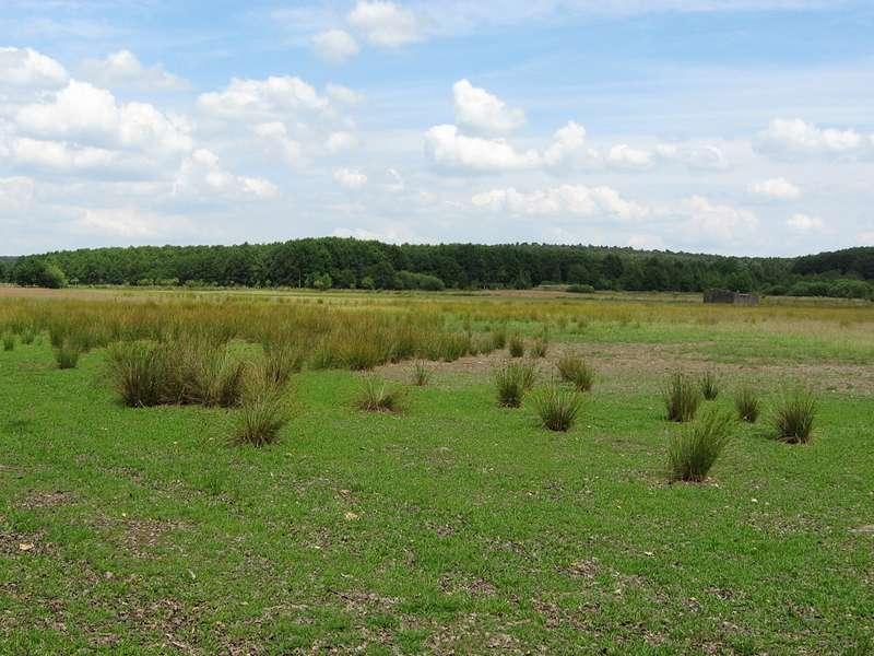 Offene Landschaft im Naturschutzgebiet Lüsekamp; Foto: 20.06.2009, Elmpt, Niederkrüchten
