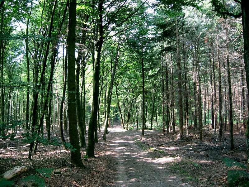 Wald im Naturschutzgebiet Lüsekamp; Foto: 20.06.2009, Elmpt, Niederkrüchten
