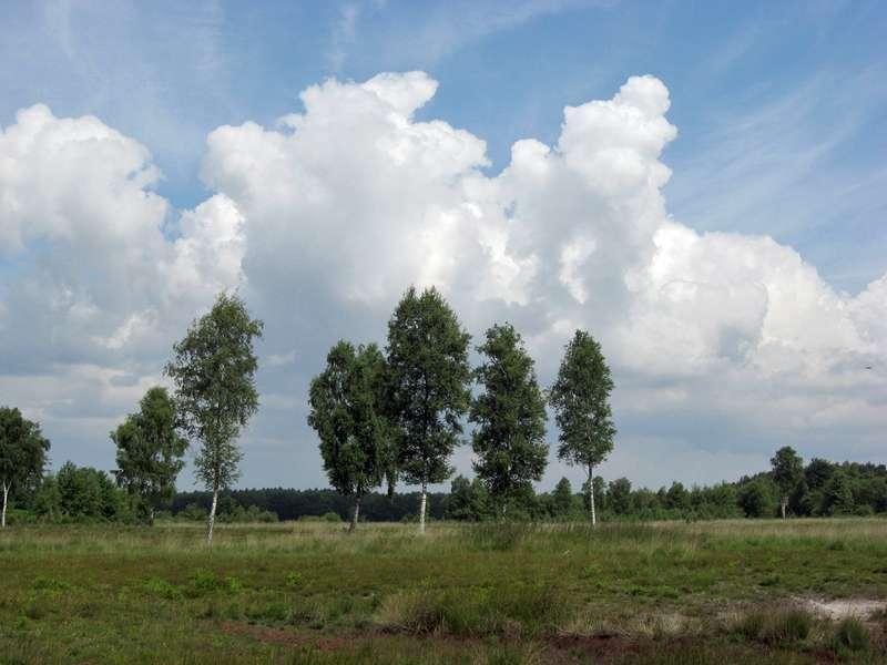 Birkenmoorwald im Naturschutzgebiet Lüsekamp; Foto: 20.06.2009, Elmpt, Niederkrüchten