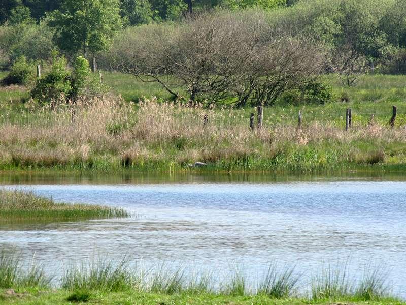Künstlich angelegtes Artenschutzgewässer im Naturschutzgebiet Lüsekamp; Foto: 23.05.2010, Elmpt, Niederkrüchten