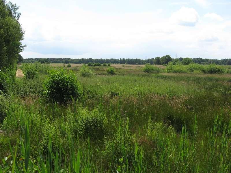 Heidelandschaft im Naturschutzgebiet Lüsekamp; Foto: 20.06.2009, Elmpt, Niederkrüchten