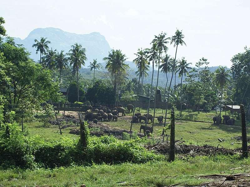 Blick über das Gelände des Elefantenwaisenhauses, bei der Bergkette im Hintergrund handelt es sich um die Knuckles Range; Foto: 09.11.2006, Kegalla