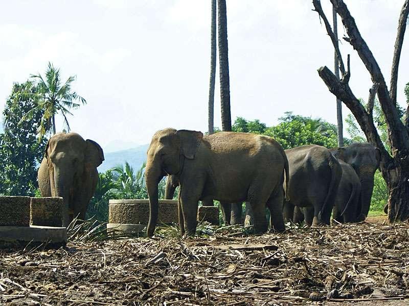 Hier gibt es für die Elefanten ein wenig Futter für zwischendurch; Foto: 09.11.2006, Kegalla