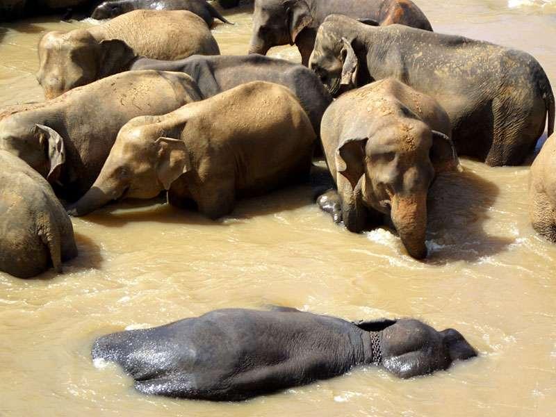 Elefanten-Entspannung pur im Maha Oya; Foto: 09.11.2006, Kegalla