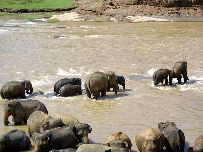 'Elefantenkarawane' im Fluss; Foto: 09.11.2006, Kegalla