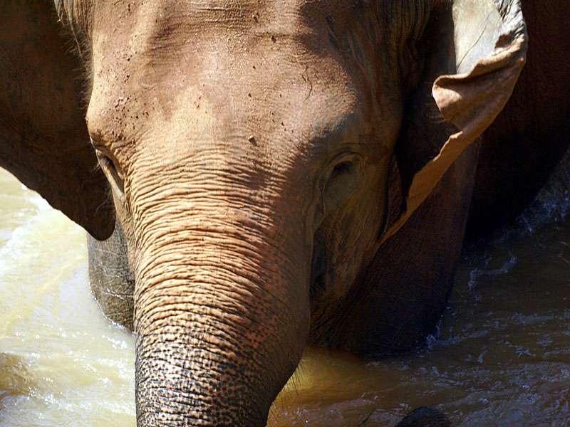 Diesem Tier steht der Badegenuss ins Gesicht geschrieben; Foto: 09.11.2006, Kegalla