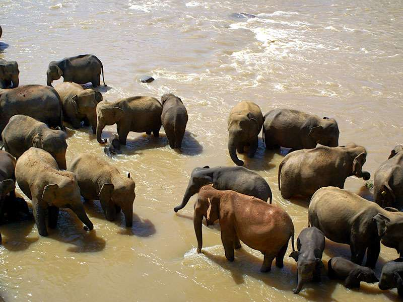 Erstaunlich bunte Elefantengruppe; Foto: 09.11.2006, Kegalla