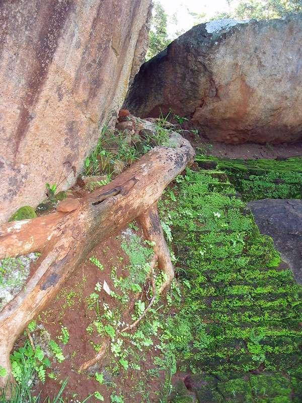 Felsen, antike Mauern und dicke Baumwurzeln im Steingarten von Sigiriya; Foto: 10.11.2006, Sigiriya