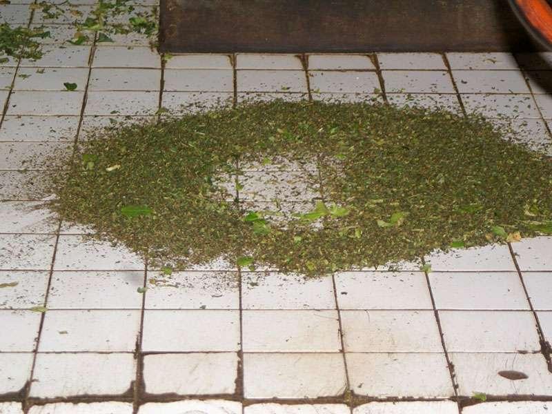 Beim Rollen der welken Teeblätter fallen einige Pflanzenteile als Abfall zu Boden; Foto: 11.11.2006, Rambukkana