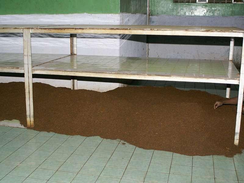 Hier wartet eine große Menge Rohtee auf die Weiterverarbeitung; Foto: 11.11.2006, Rambukkana