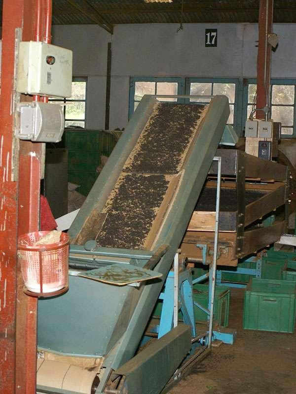 Eine der vielen Arbeitsstationen in der Teefabrik; Foto: 11.11.2006, Rambukkana
