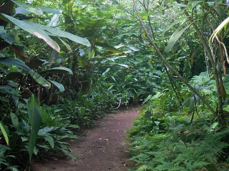Im Brief Garden schreitet man unter üppiger Vegetation hindurch; Foto: November 2006, Kalawila