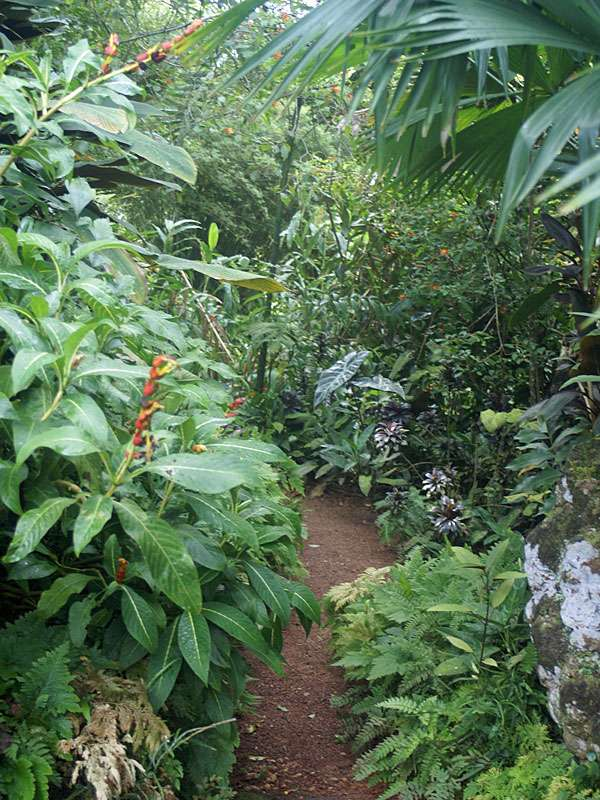 Blüten säumen die Wege; Foto: November 2006, Kalawila