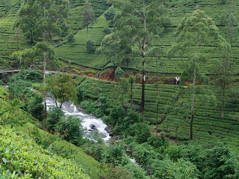 Wasserläufe sind im Hochland von Sri Lanka in der Nähe vieler Teeplantagen zu finden; Foto: 18.09.2015, Nähe Nuwara Eliya