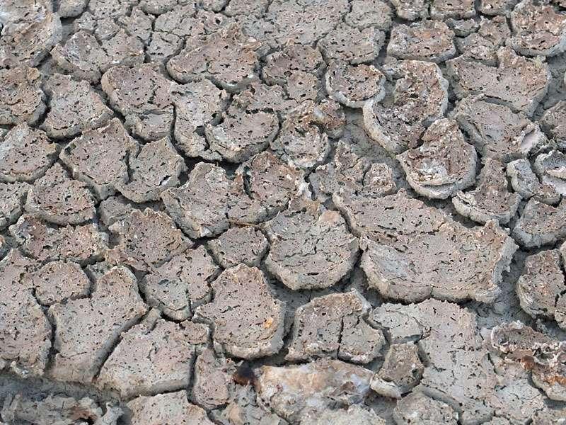 Ausgetrockneter Boden in einer Salzpfanne; Foto: 18.03.2017, Kuzikus Wildlife Reserve