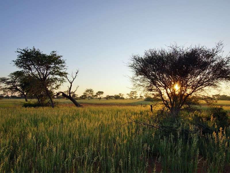 Ein neuer Tag bricht in der grünen Kalahari an; Foto: 20.03.2017, Kuzikus Wildlife Reserve