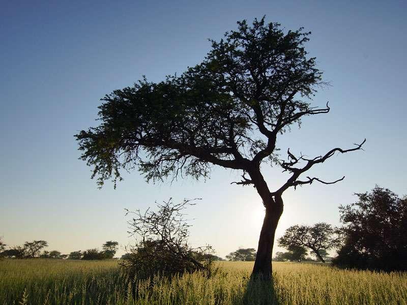Ein Morgen in der Kalahari; Foto: 20.03.2017, Kuzikus Wildlife Reserve