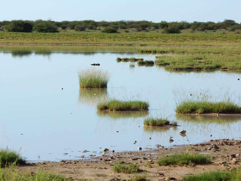 Nach Regenfällen sammelt sich mancherorts Wasser, das jedoch unter der sengenden Sonne schnell wieder verdunstet; Foto: 24.03.2017, Kuzikus Wildlife Reserve
