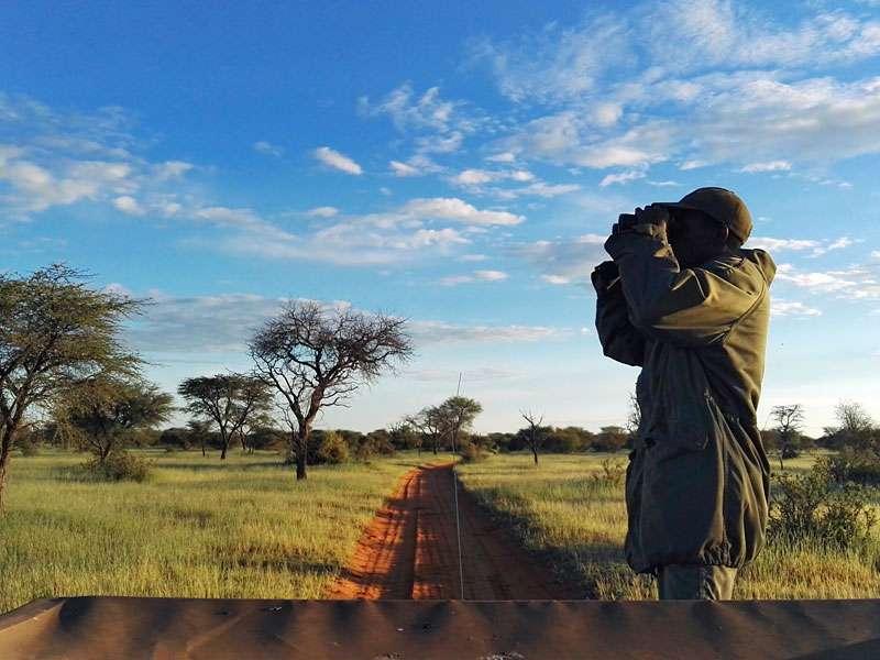 Buschmann John hält Ausschau nach Tieren; Foto: 24.03.2017, Kuzikus Wildlife Reserve