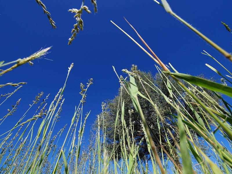 Kniehoch sind die Gräser in der Kalahari, wenn es zuvor ausreichend geregnet hat; Foto: 25.03.2017, Kuzikus Wildlife Reserve