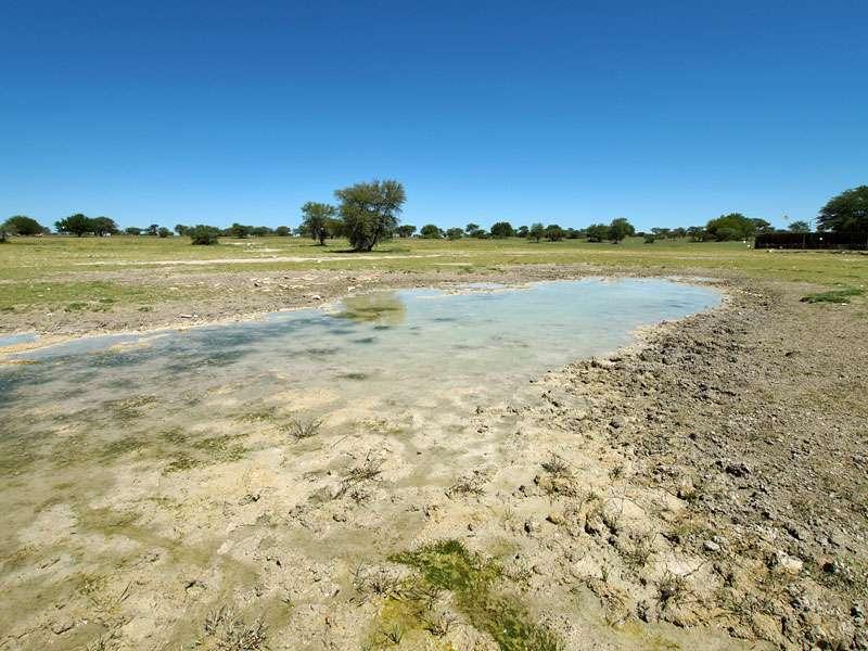 Die Ränder der Wasserstellen sind ein Paradies für Fährtenleser; Foto: 25.03.2017, Kuzikus Wildlife Reserve