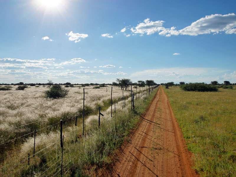 Schnurgerade verläuft die Grenze zwischen dem Schutzgebiet und dem Areal der benachbarten Farm (links im Bild); Foto: 27.03.2017, Kuzikus Wildlife Reserve
