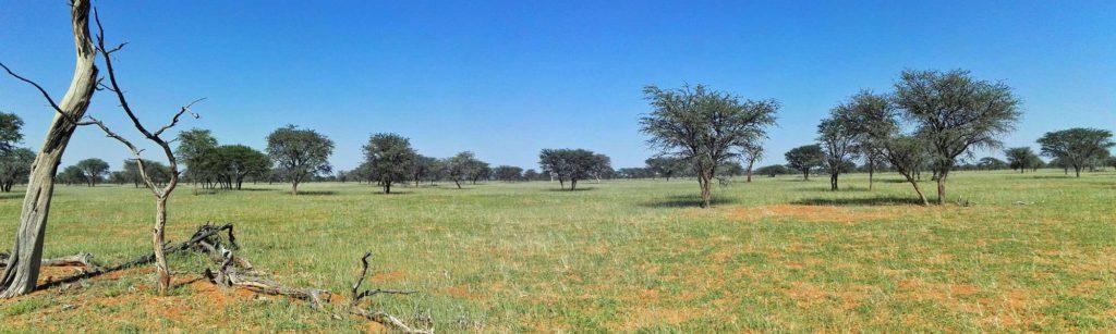 Landschaft in der Kalahari; Foto: 30.03.2017, Kuzikus Wildlife Reserve
