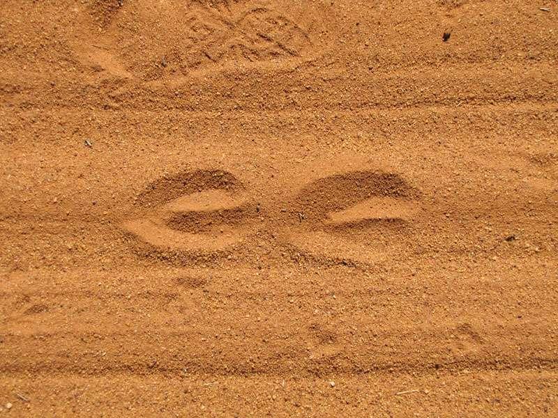 Tierfährtenim Sand; Foto: 07.04.2017, Kuzikus Wildlife Reserve