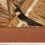 Schwalben (Swallows and Martins, Hirundinidae)
