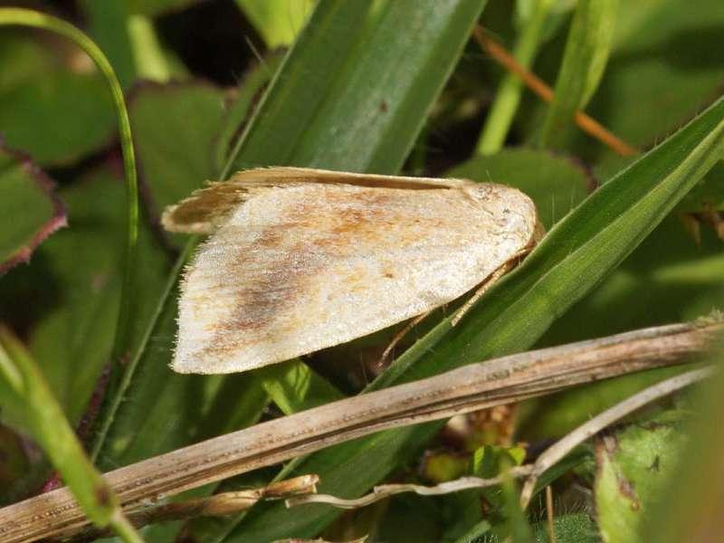 Unbestimmte Schmetterlingsart Nr. 157; Foto: 09.12.2017, Nähe San-Rafael-Wasserfall