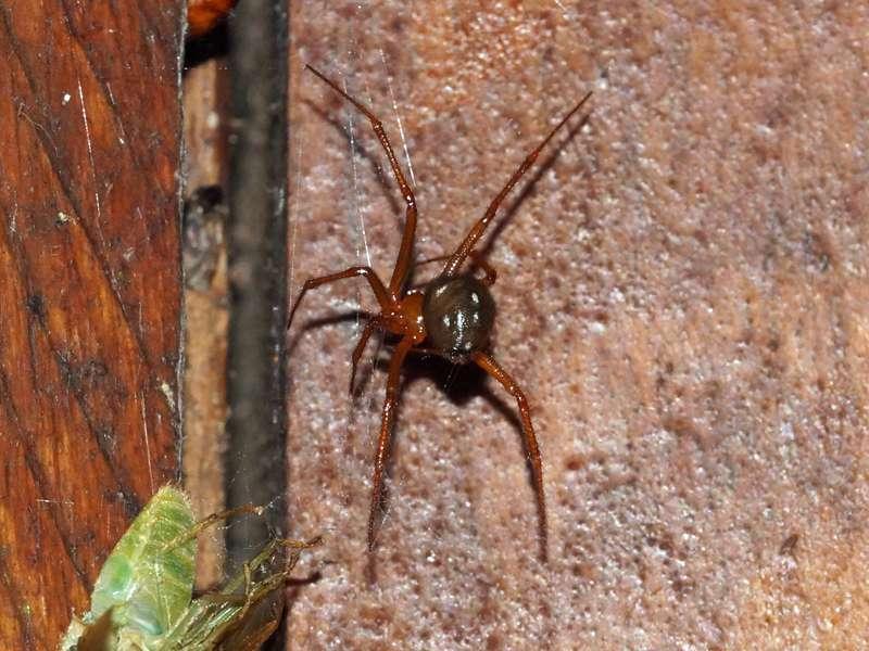 Unbestimmte Spinnenart Nr. 43; Foto: 18.12.2017, Sacha Lodge