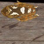 Amphibien (Amphibians, Amphibia)