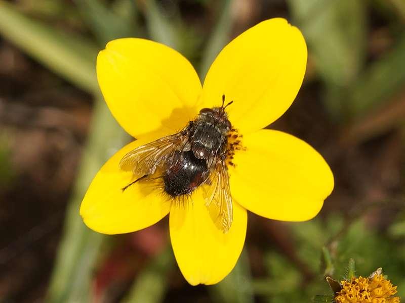 Unbestimmte Insektenart Nr. 28; Foto: 25.12.2017, Wanderweg zum Condor-Machay-Wasserfall